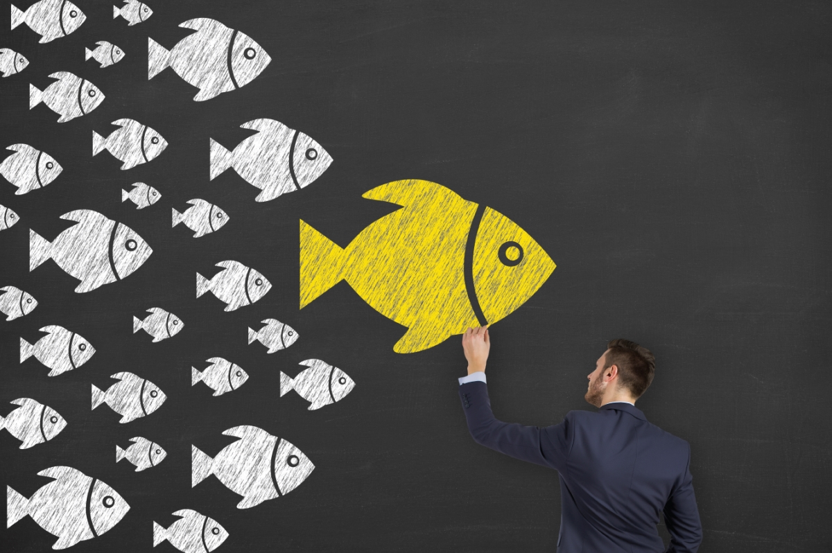 This is a picture of one fish leading a school of fish. Corey Ciocchetti is a top leadership speaker. He speaks about being a leader you would actually follow. He also has inspirational speeches on building morale and being a professional.